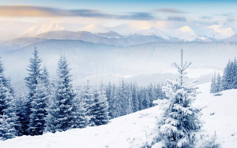 landscapes winter snow trees wallpaper