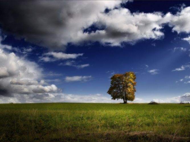 clouds nature trees skylines Earth fields outdoors plants wallpaper