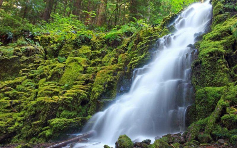 green forests waterfalls wallpaper