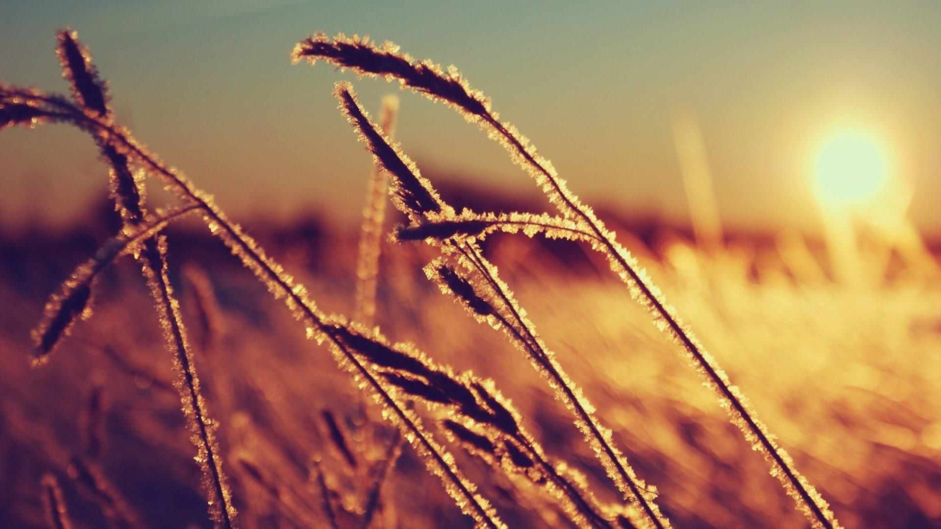 Ears Tag wallpapers: Field Clouds Ears Sun Grass Sunset Sky Corn ...