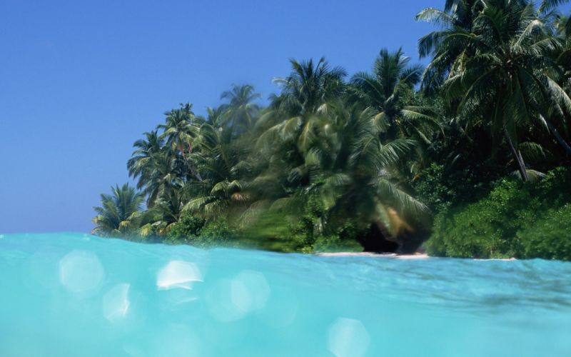 landscapes trees islands sea beaches wallpaper