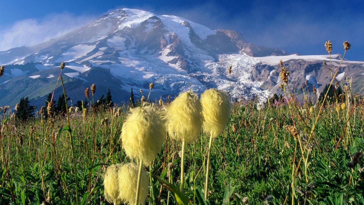 National Park Washington Mount Rainier wallpaper