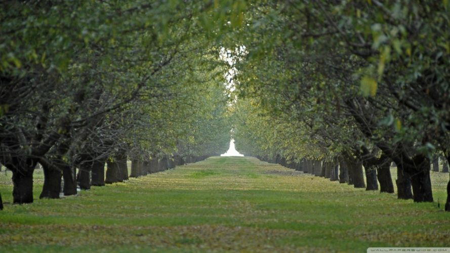 nature trees tunnels wallpaper