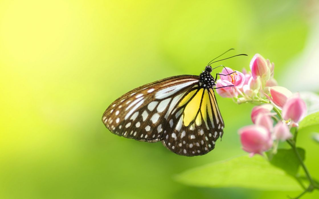 nature flowers insects macro depth of field butterflies wallpaper