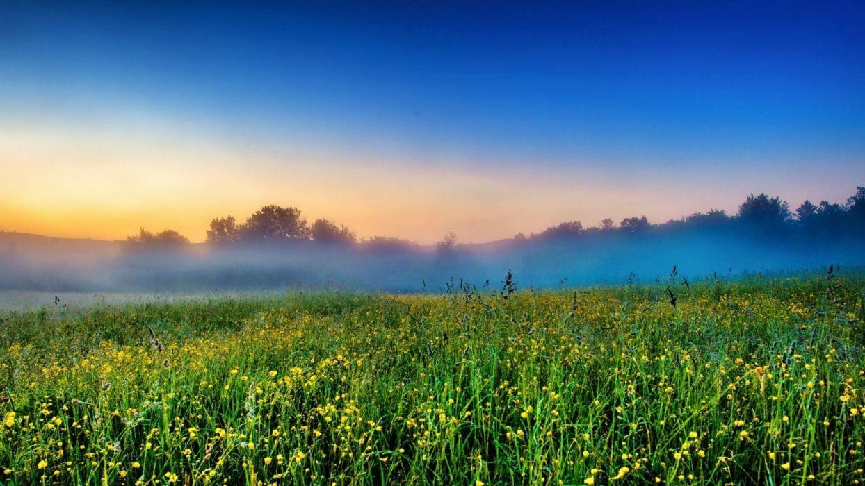 landscapes nature trees fog crops farms wallpaper