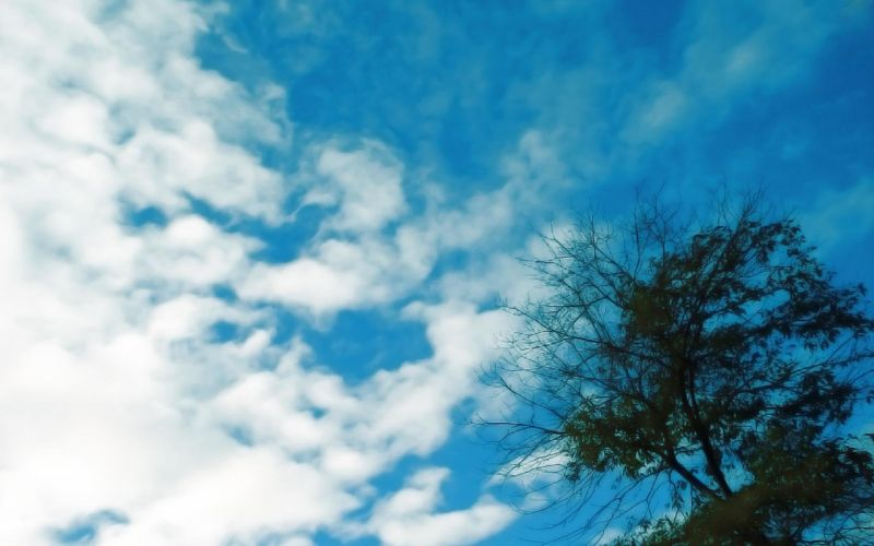 clouds nature trees skyscapes wallpaper