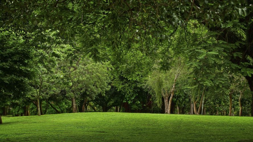 green landscapes nature trees grass parks wallpaper