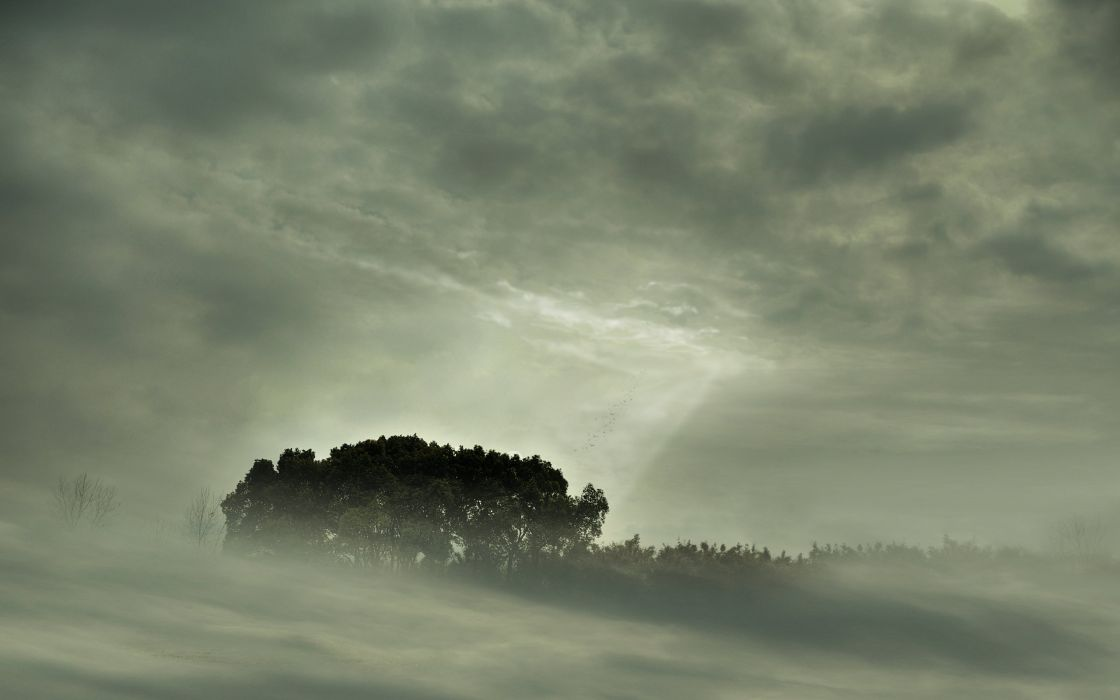 clouds landscapes nature trees mist sunlight monochrome wallpaper