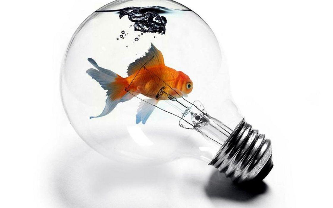 abstract fish goldfish aquarium light bulbs wallpaper