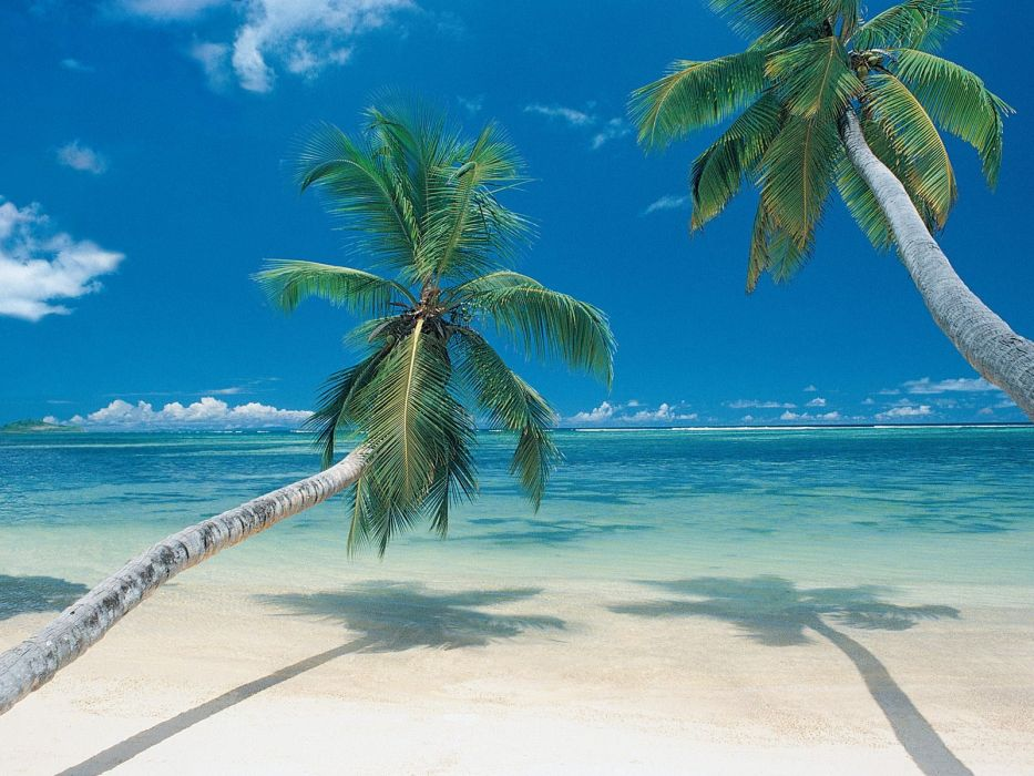 palm trees beaches wallpaper