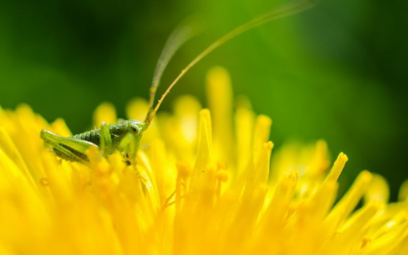 nature flowers insects macro yellow flowers wallpaper