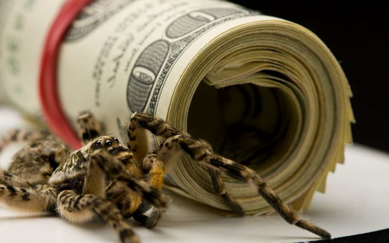 money spiders Dollars wallpaper