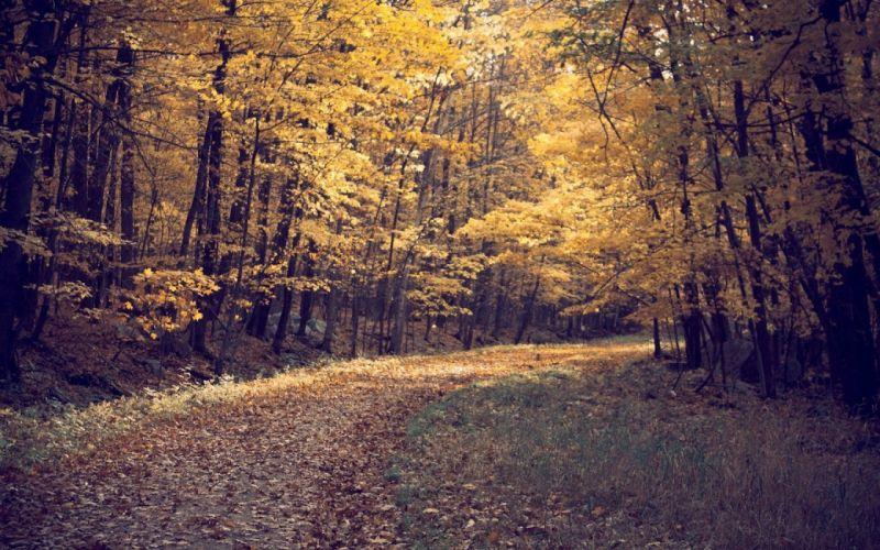 leaves paths fallen leaves wallpaper
