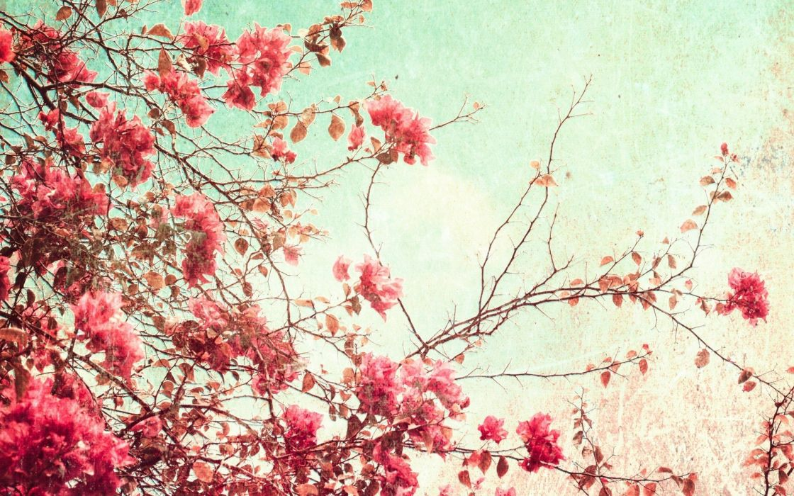 nature trees blossoms branches wallpaper