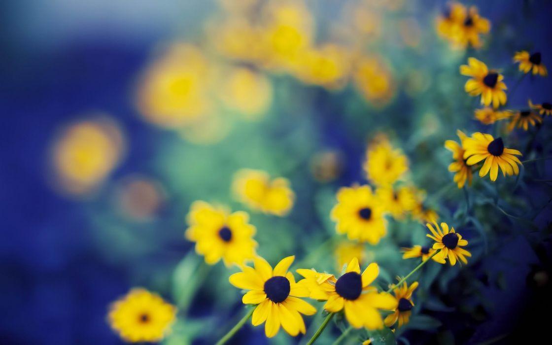 Nature Flowers Bokeh Depth Of Field Yellow Flowers Wallpaper