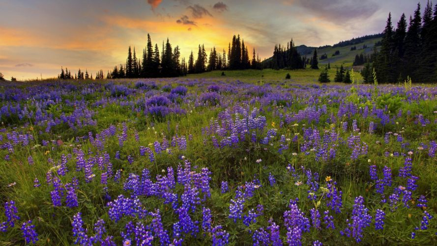 forests silver trail Washington Mount Rainier wallpaper