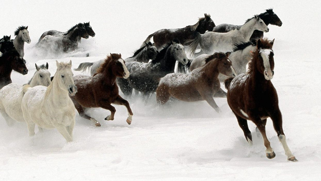 snow animals horses wallpaper