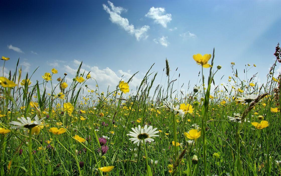 landscapes flowers spring wallpaper