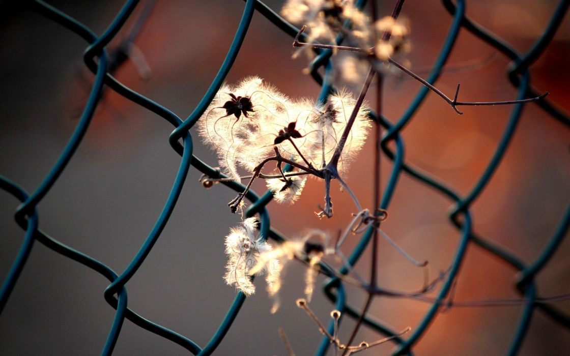 flowers fences macro depth of field chain link fence wallpaper