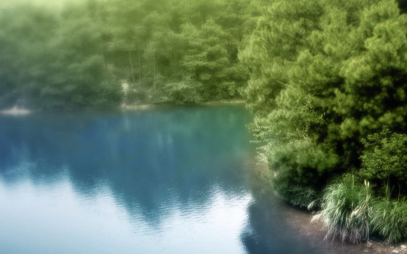 landscapes nature trees forests lakes reflections blurred wallpaper