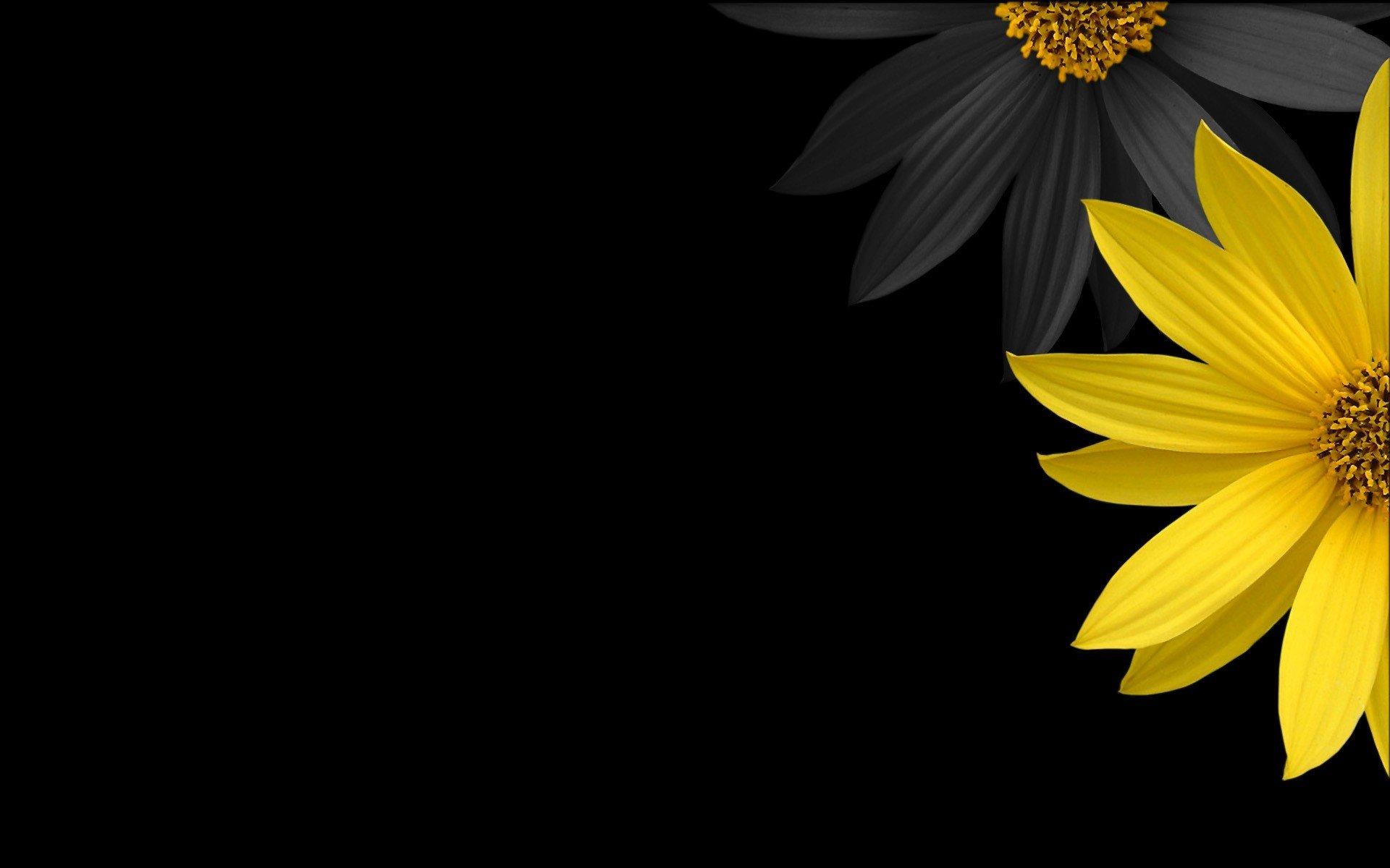 Black minimalistic yellow flower petals black background - Flower wallpaper black ...