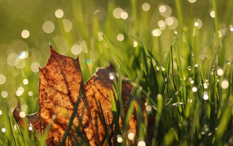 leaves grass wallpaper