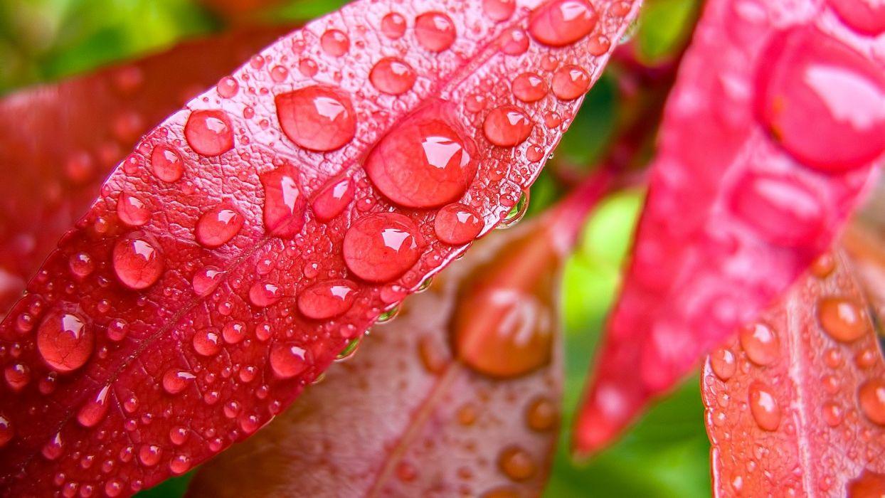 nature leaves water drops wallpaper