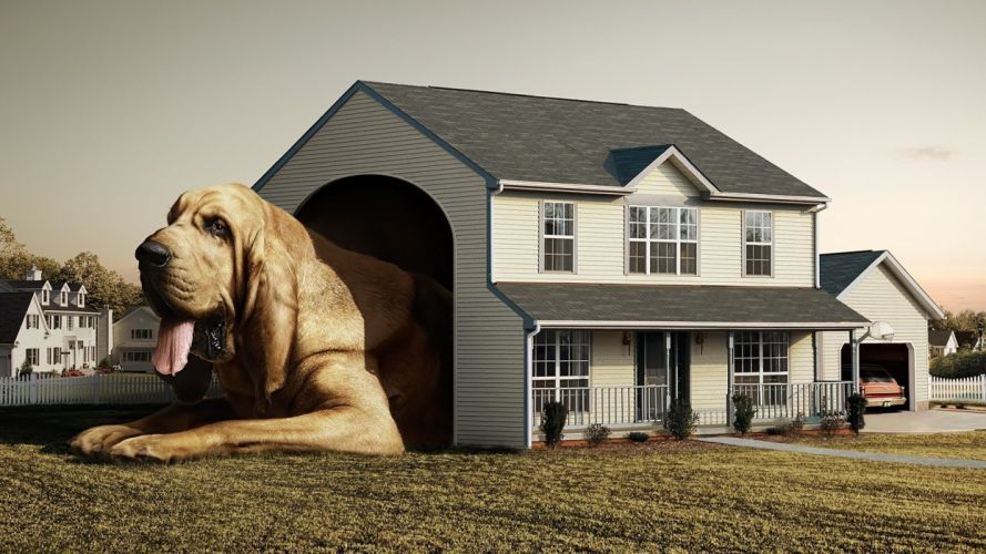 houses dogs photo manipulation wallpaper