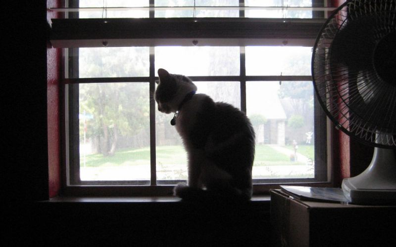 cats animals window panes wallpaper