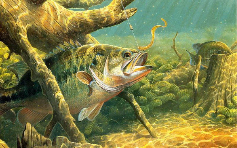 fishing wallpaper