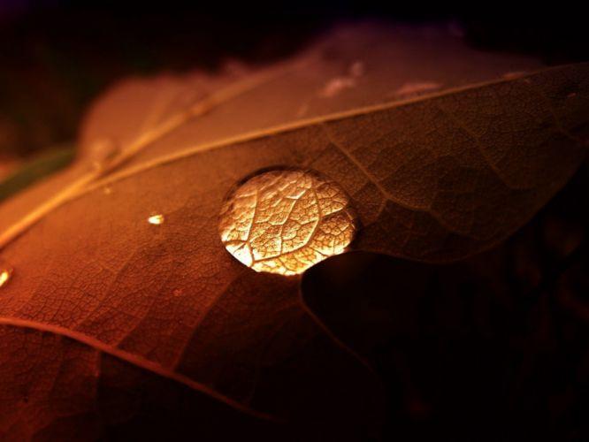 leaves water drops macro depth of field wallpaper