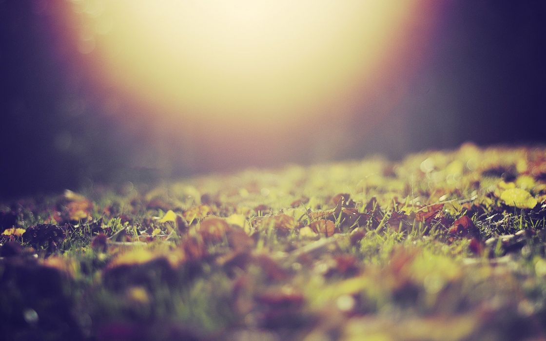 nature leaves grass sunlight macro depth of field ground fallen leaves wallpaper