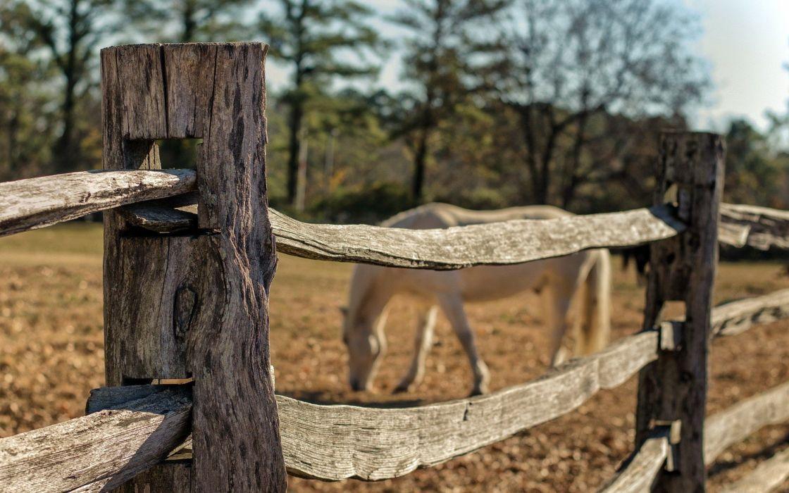 fields horses wallpaper