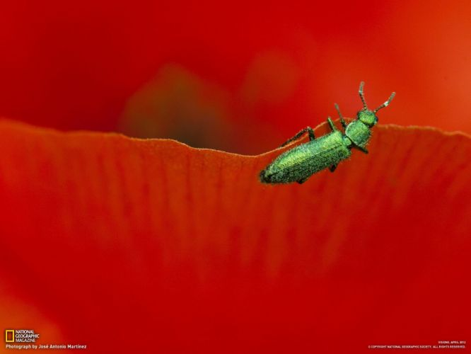 flowers insects leaves macro wallpaper