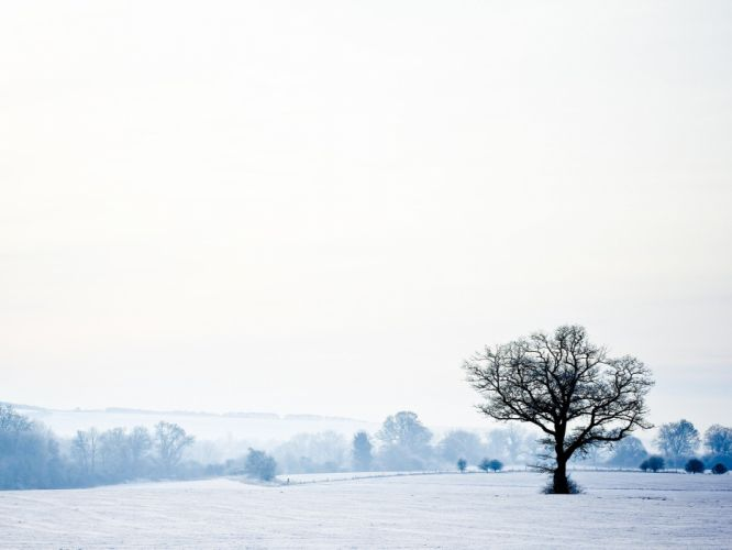 landscapes winter snow trees white cold seasons lonely tranquility wallpaper