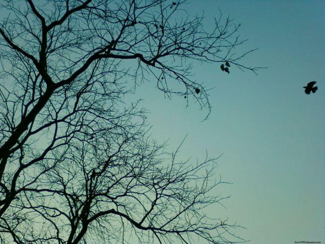 blue trees birds wallpaper