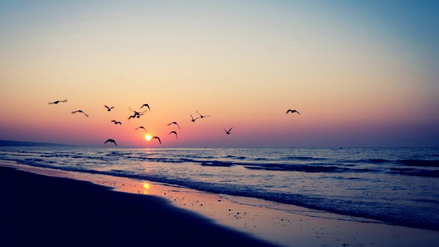 sunset ocean landscapes nature Sun England birds animals skyscapes land sea beaches wallpaper