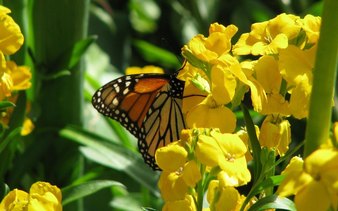 nature flowers animals insects plants butterflies wallpaper