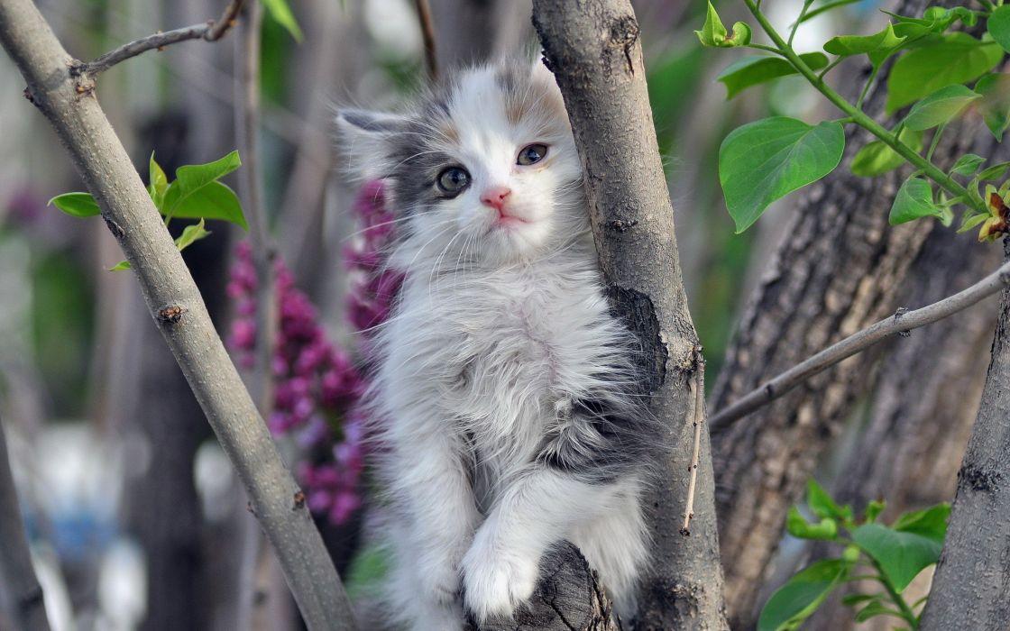 nature cats animals kittens wallpaper