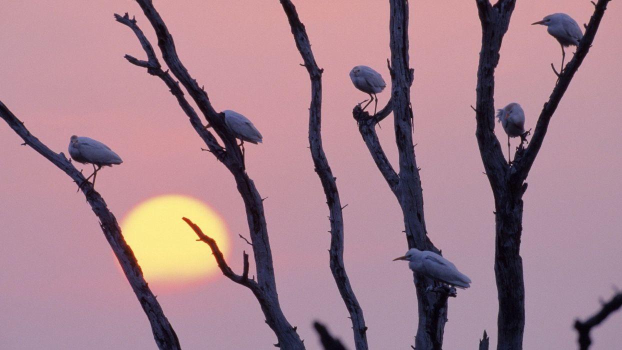 sunset birds Texas branches egrets wallpaper