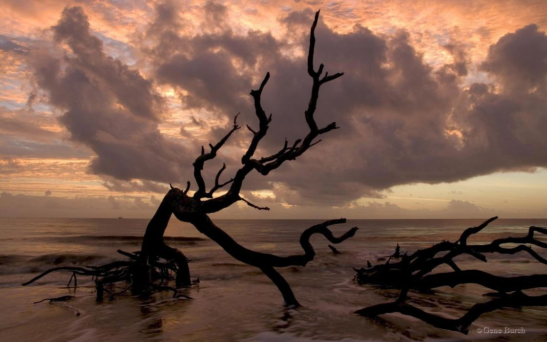 water clouds landscapes nature trees branches driftwood wallpaper