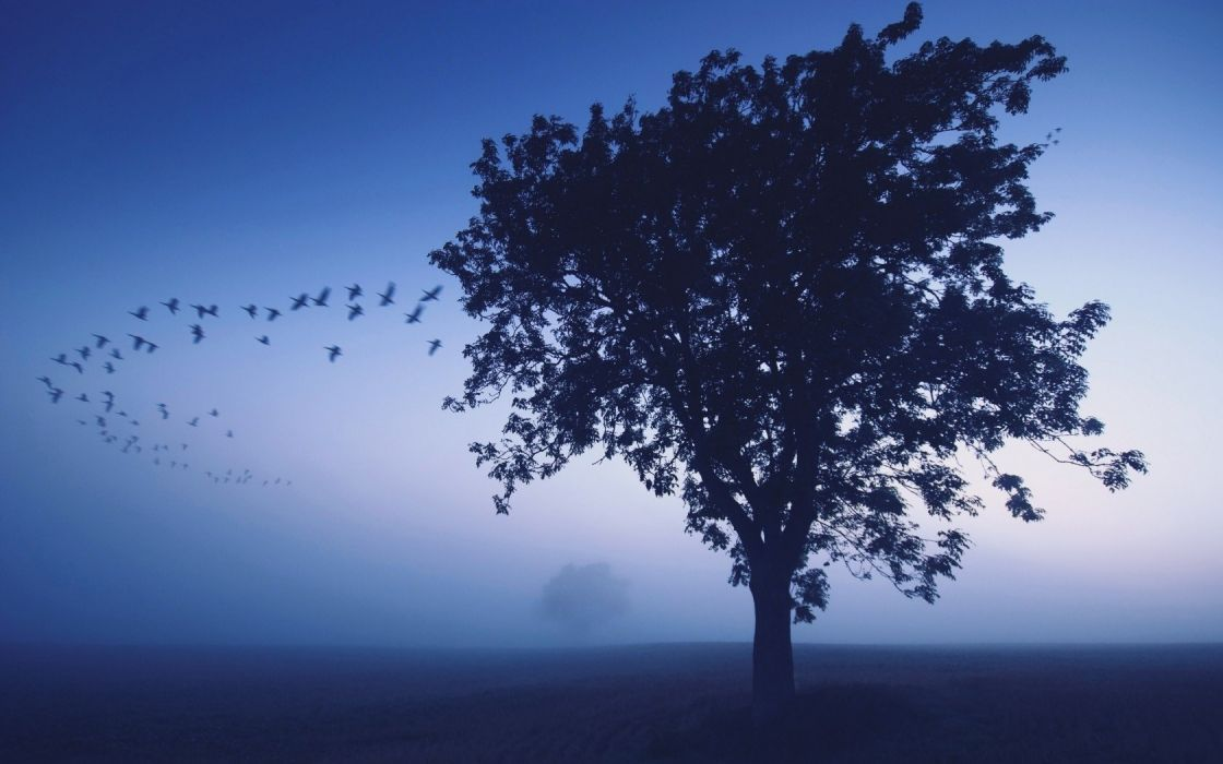 Blue Landscapes Nature Dark Birds Lonely Evening Shades Sky Wallpaper