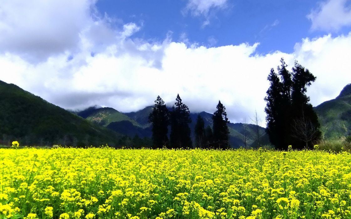 mountains clouds landscapes nature trees flowers hills yellow flowers skies wallpaper