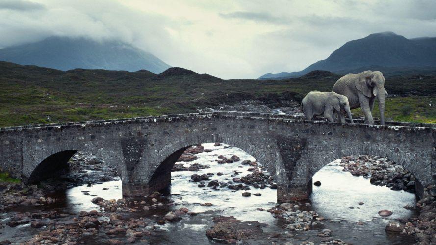 animals bridges elephants rivers Isle of Skye baby elephant baby animals wallpaper