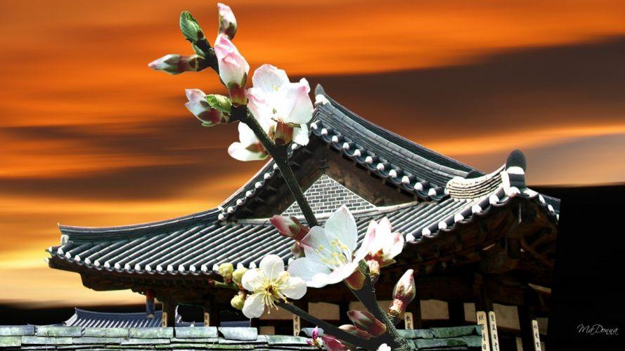 sunset cherry blossoms pagodas oriental pagoda wallpaper