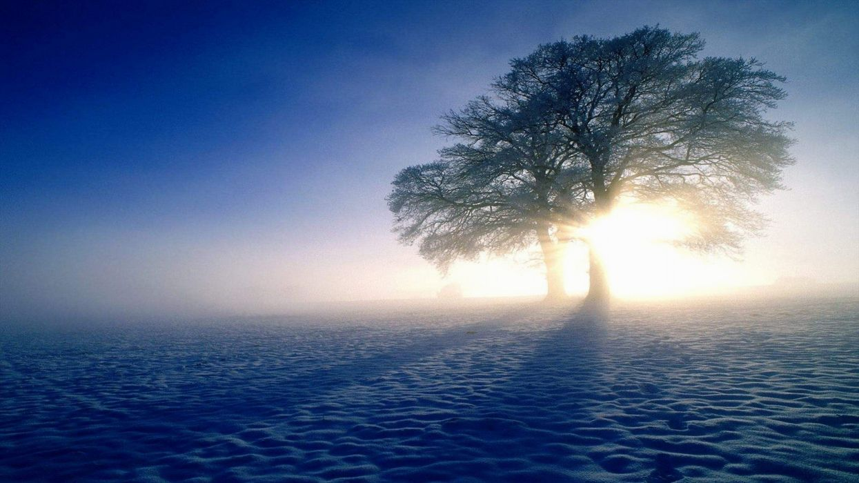 plandscapes nature winter snow Sun trees shadows HDR photography wallpaper