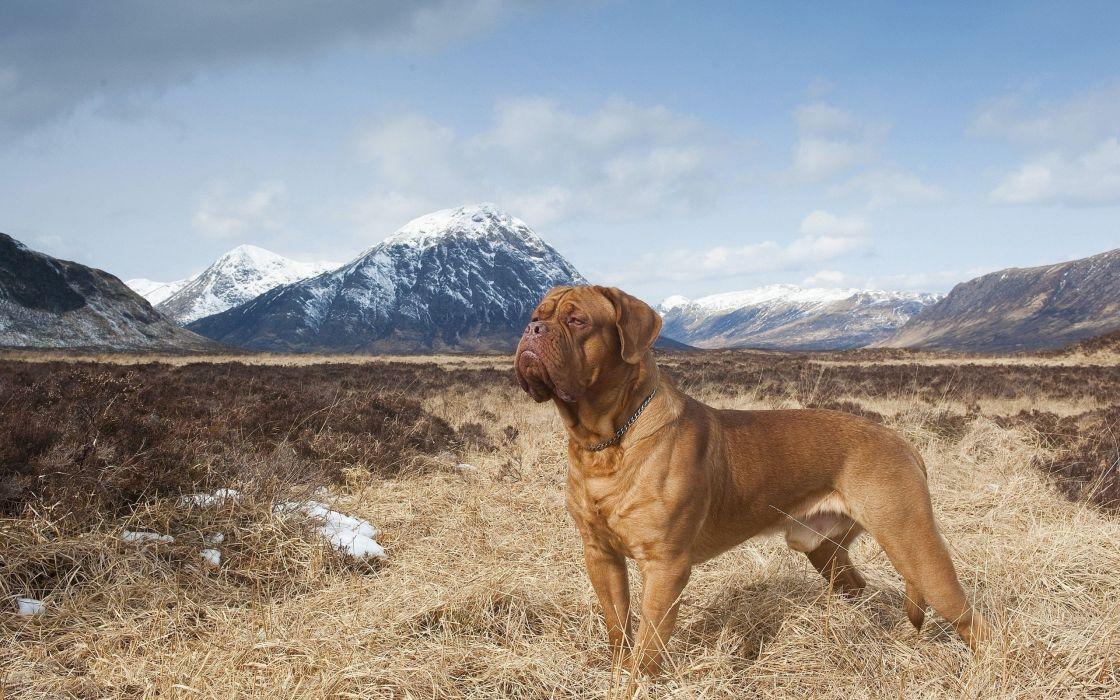 mountains dogs plains pets wallpaper