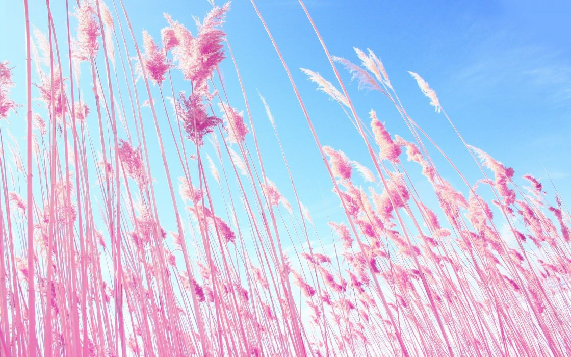 Nature Pink Grass Plants Macro Dreamy Wallpaper