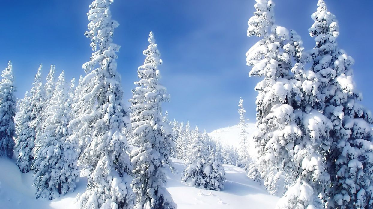 ice landscapes nature winter snow trees wallpaper