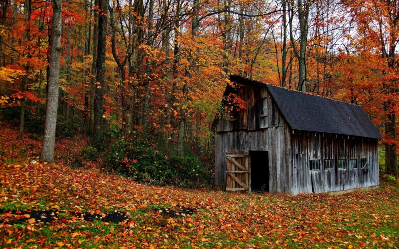 landscapes nature trees forests houses wallpaper